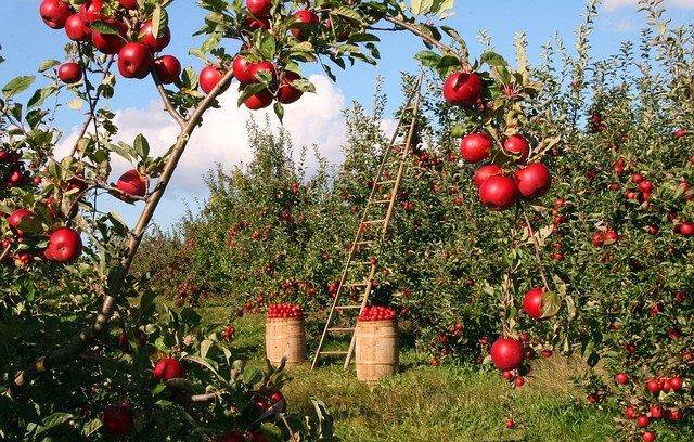 Co jsou bioprodukty?