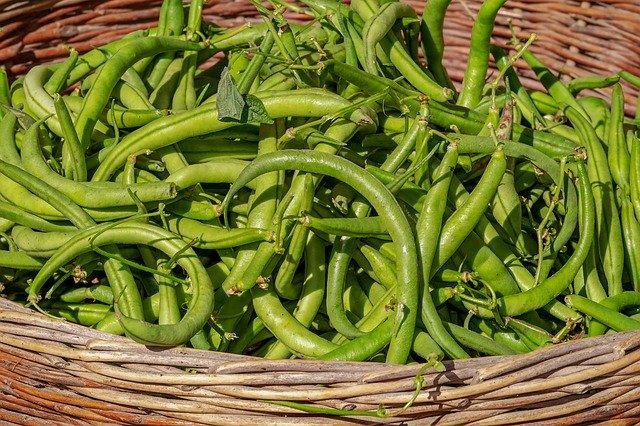 Klíčky fazole mungo